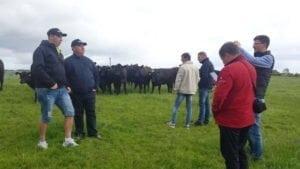 Fermierii admirând tineretul din rasa Angus.